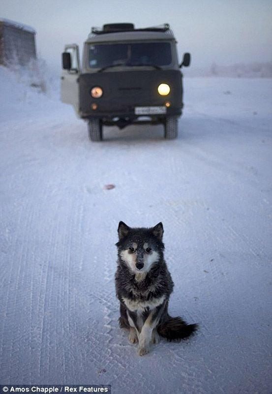 Самый северный населенный пункт России, в мире, на карте, материке. Самое холодное место, где живут люди: Диксон, Певек, Оймякон. Температура, где находится