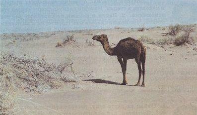 Пустыни и полупустыни России, животные и растения, климатический пояс, характеристика природной зоны