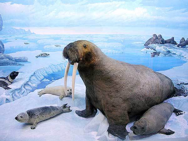Арктические пустыни России. Географическое положение, карта, климат, животный, растительный мир