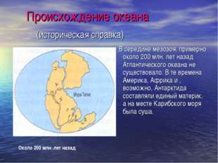 Атлантический океан. Органический мир, виды, разновидности рыб, список животных и растений. Презентация для детей